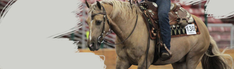 Trent Pedersen reining clinic featured image